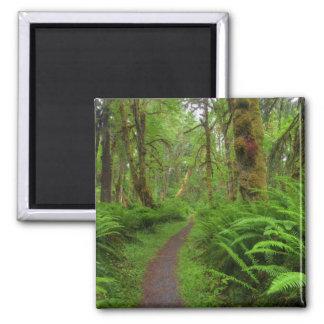 覆われるかえでの林間の空地の道、シダおよびコケ マグネット
