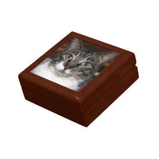 見ている虎猫猫写真 ギフトボックス
