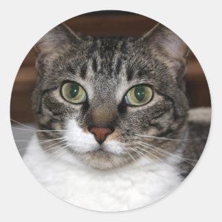 見ている虎猫猫写真 ラウンドシール