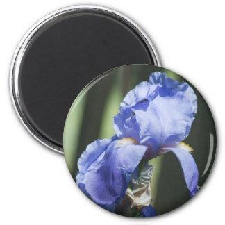 見事なアイリス花のギフト マグネット