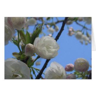 見事な春の開花 カード