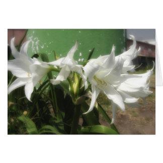 見事な白い花3 カード