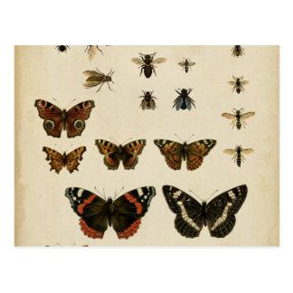 視野のスタジオによる庭の昆虫 ポストカード