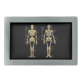 解剖学の図表と分類される人間の骨組 長方形ベルトバックル