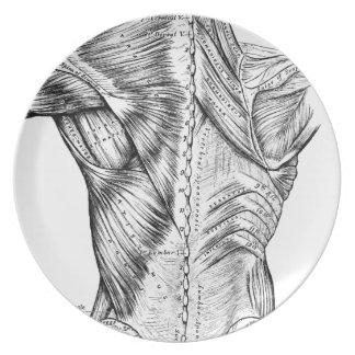 解剖学の芸術の白黒背筋(1890年) プレート