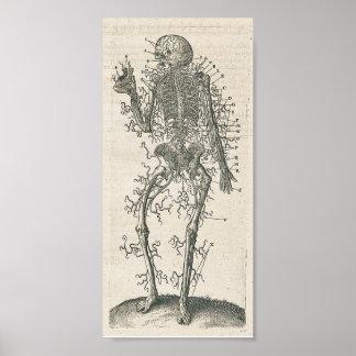 解剖学ポスター ポスター