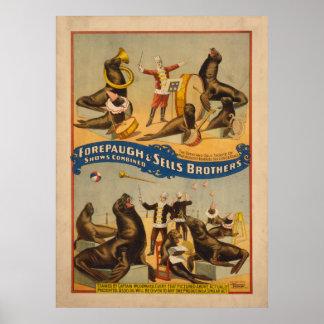 訓練されたシールのサーカスポスター- Forepaugh及び販売法 ポスター