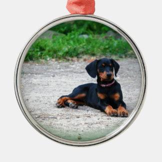 誇りを持ったで、かわいらしい初恋- (犬)ドーベルマン・ピンシェル メタルオーナメント