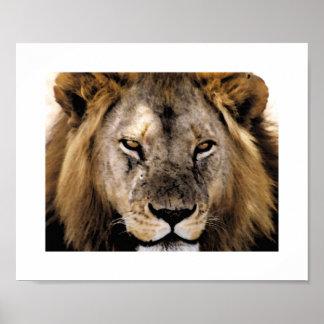 誇りを持ったなSimba - Serengeti ポスター