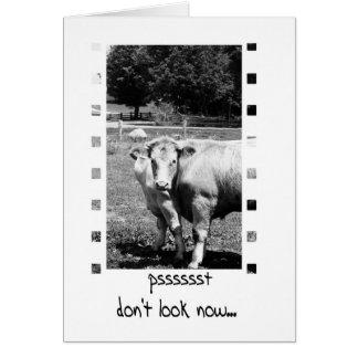 誕生日のユーモア-牛 カード