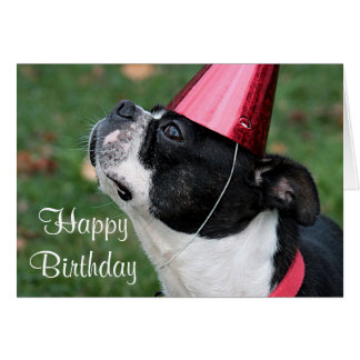 誕生日の願いのボストンテリア グリーティングカード