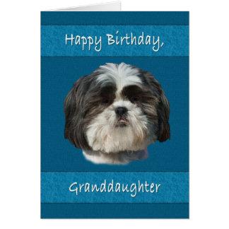 誕生日、孫娘、シーズー(犬)のTzu犬 カード