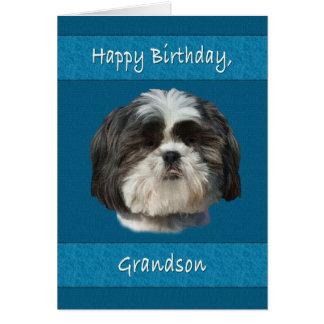 誕生日、孫、シーズー(犬)のTzu犬 カード