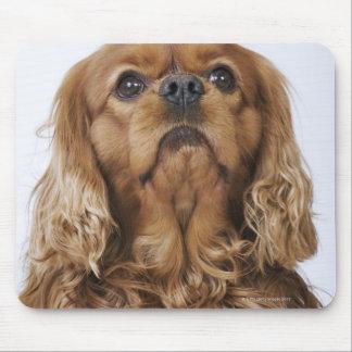 調べている無頓着なチャールズ王スパニエル犬 マウスパッド