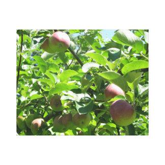 谷のりんごのノバスコシアの包まれたなキャンバス キャンバスプリント