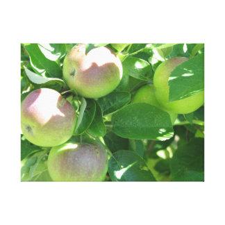 谷のりんごノバスコシア キャンバスプリント