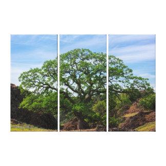 谷のオークの木 キャンバスプリント