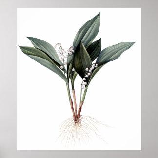 谷の優れた植物のプリントのユリ ポスター