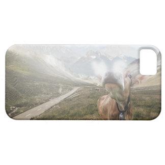 谷の牛- iPhone 5の場合 iPhone SE/5/5s ケース