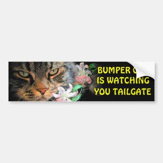 豊富な猫はテールゲート3見ています バンパーステッカー
