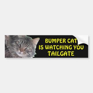 豊富な猫はテールゲート39のミーム見ています バンパーステッカー