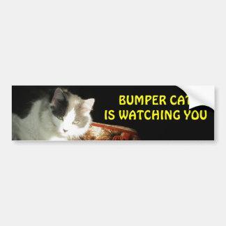 豊富な猫は2つを見ています バンパーステッカー