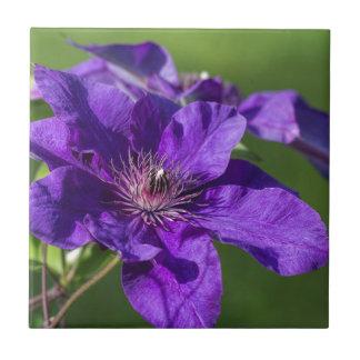豊富な紫色クレマチスの花のマクロ タイル