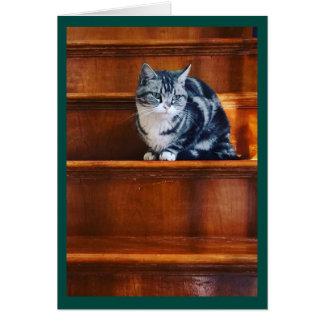 豊富な茶色の背景幕の銀製猫 カード