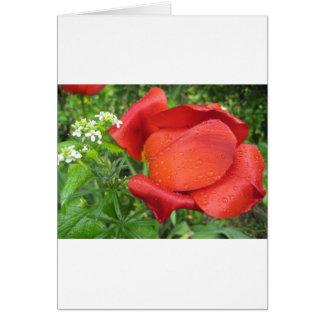 豊富な赤のチューリップおよび甘い白 カード