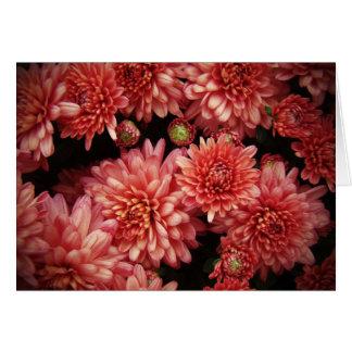 豊富な赤の菊 カード