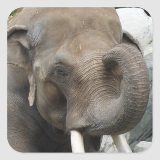 象のトランクのステッカー スクエアシール