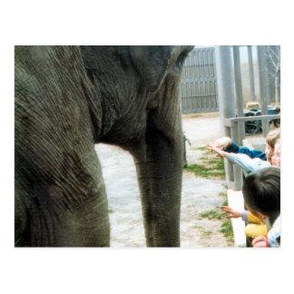 象の午後 葉書き