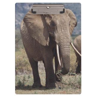 象の子牛との母象の歩く クリップボード
