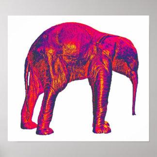 象の子牛、赤いですかピンク、白の背部 ポスター