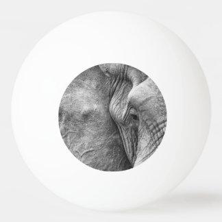 象の目 卓球ボール