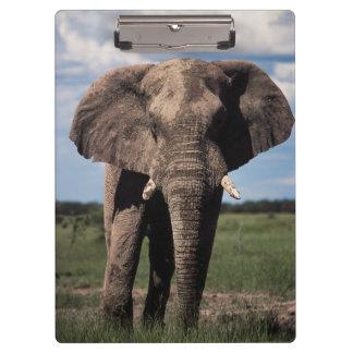 象の若者の男性 クリップボード