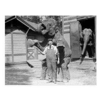 象はトリック1915年を行います ポストカード