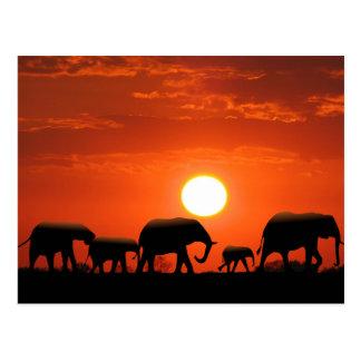 象家族 ポストカード