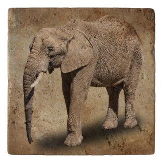 象 トリベット