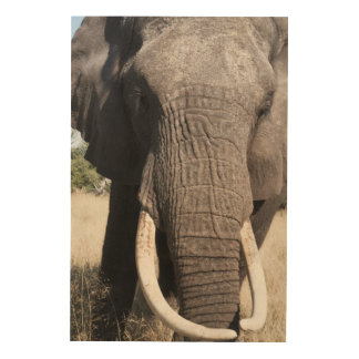 象(Loxodontaのafricana)、Abuのキャンプ3 ウッドウォールアート