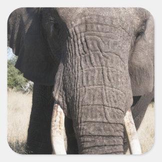 象(Loxodontaのafricana)、Abuのキャンプ3 スクエアシール