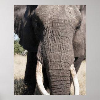 象(Loxodontaのafricana)、Abuのキャンプ3 ポスター