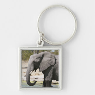 象(Loxodontaのafricana)、Savuteチャネル キーホルダー