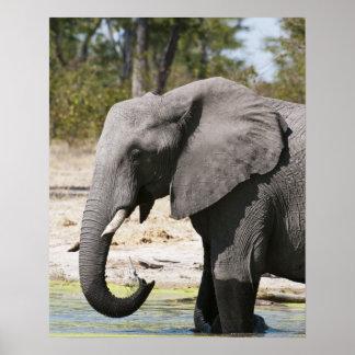 象(Loxodontaのafricana)、Savuteチャネル ポスター