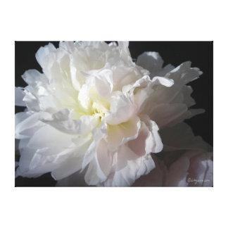 豪華で白いシャクヤクの花 キャンバスプリント