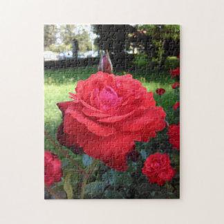 豪華で赤いバラ ジグソーパズル