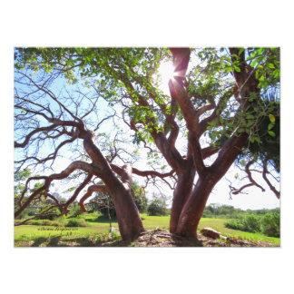 豪華なオクラのリンボーの木の日曜日のプリント フォトプリント