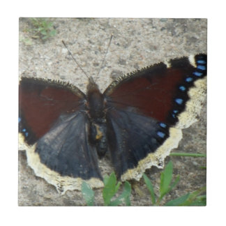 豪華な嘆くマント蝶の閉めて下さい タイル