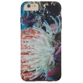 豪華な海底熱帯珊瑚礁 TOUGH iPhone 6 PLUS ケース