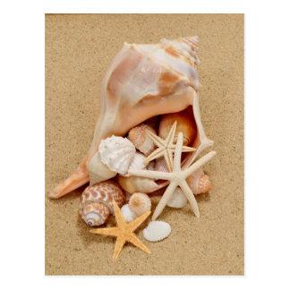 貝およびヒトデが付いているコンシュの貝 ポストカード